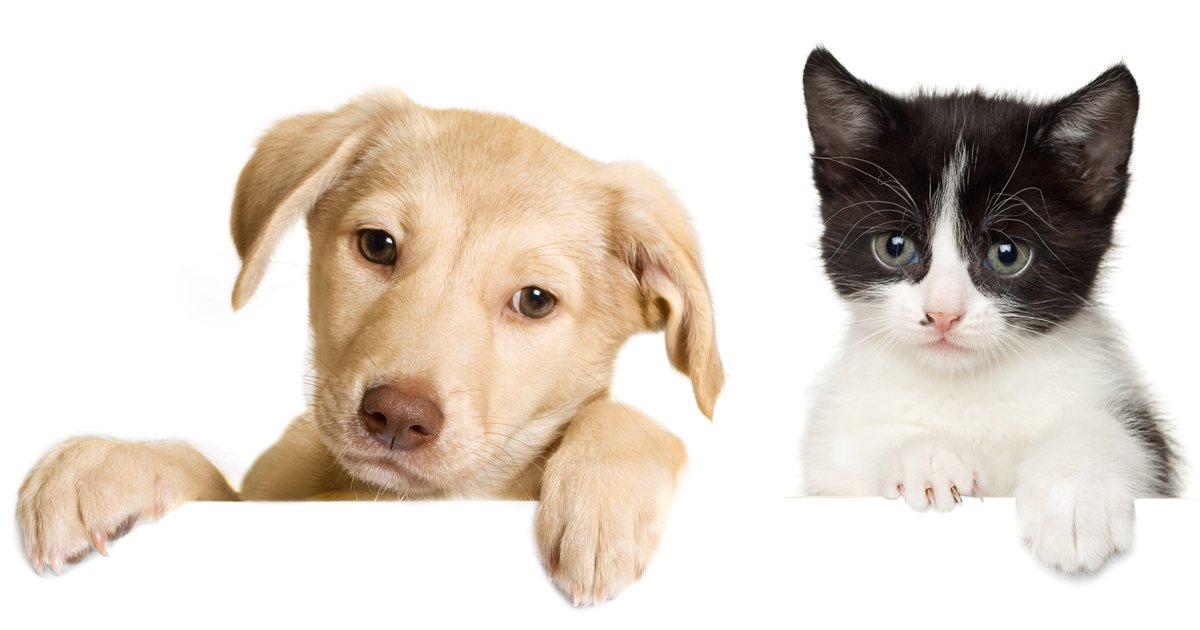 Sims  Cats And Dogs Adopt And Sell Pets