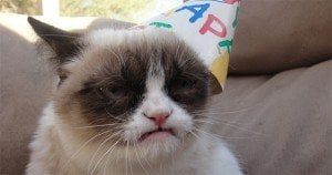"""Grumpy Cat"" celebrates her second birthday"
