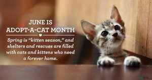 June is Adopt-A-Cat Month