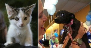 15,000 pets find new homes in national adoption event