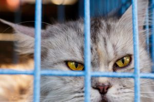 Boarding VS Pet Sitter: What To Consider