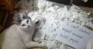 25 pictures of cat shaming