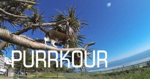 Didga The Acrobat Cat In: Purrkour [VIDEO]