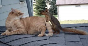 Cat Plays With Unlikely Friend