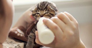 Nurseries Give Newborn Kittens A New Chance At Life