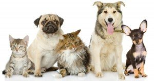 Study ranks the best & worst U.S. cities for pets