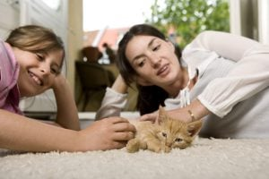 Keeping You And Your Pets Safe From Domestic Violence