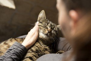Survey Reveals That Doctors Prescribe Pets For What Ails You