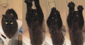 Black Cat Likes To Belly Dance