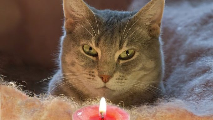 cat looking at candle