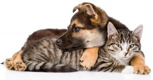 Best and worst states for animal protection laws in 2014