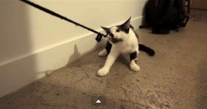 How To Walk Your Human [VIDEO]