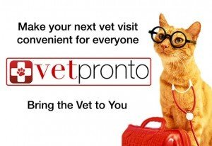 VetPronto: A new way for your cat to see the vet
