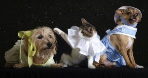 Today is National Dress Up Your Pet Day