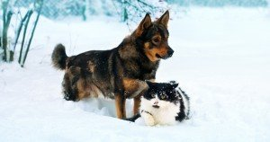 Blizzard safety alert for your dogs and cats