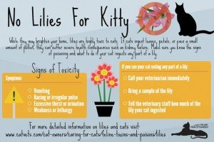 Beware: Easter Lilies Are Toxic To Cats