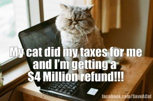 10 Things Your Cat Wants To Spend Your Tax Refund On