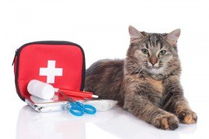 10 Must Have Items For Your Cat's Emergency Survival Kit Or Go Bag