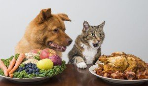 Is It Healthy For Cats & Dogs To Be Vegetarian?