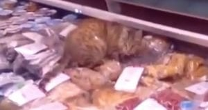 Cat Burglar Steals $1000 In Seafood: Becomes A Celebrity