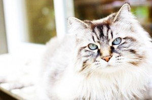 November Is Pet Cancer Awareness Month: Cats And Lung Cancer