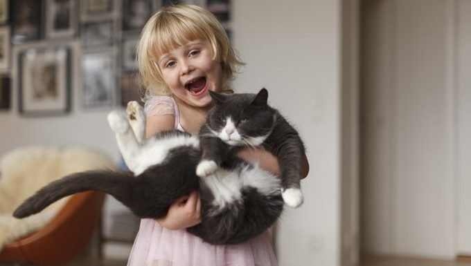 little girl holding cat