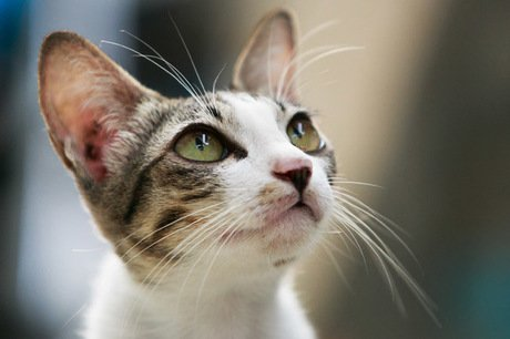 Adolescent Cats: What to Expect