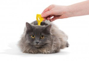 How To Remove A Tick From Your Cat