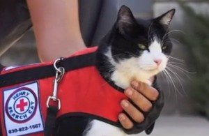 How To Find A Lost Cat: Search And Rescue Cat Henry Hot On The Tail
