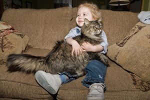Top 16 Kid-Friendly Cat Breeds