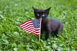 Adopt A Cat For The 4th Of July