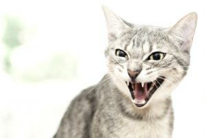 5 Ways to Stop Cat Aggression And Bad Behavior