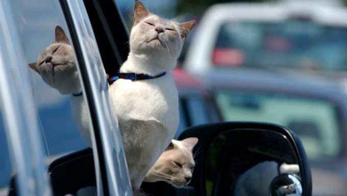 two cats on road trip