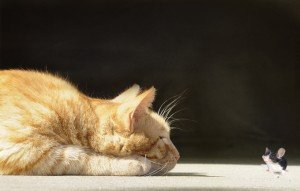 10 Facts About Cats And Mice