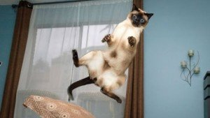 7 Cats Who Tried To Make A Jump, But Didn't Even Come Close