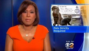 Rescue Pets Only Apartment Building In Los Angeles Is A Haven For Responsible Pet Owners