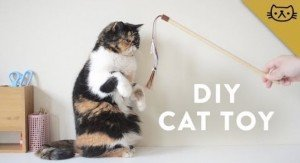 DIY Cat Toys: 3 Fun Projects You Can Make In A Day