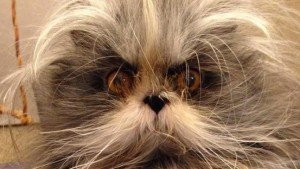Werewolf Cat Is Strange And Adorable