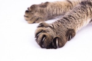 Clip, Cap, or Claw Your Cat's Paws
