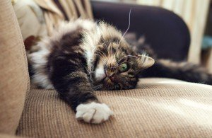 How To Stop Your Cat From Scratching Up Your Furniture