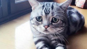 Meet Luhu: The Saddest Kitten In The World