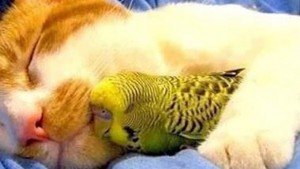 33 Adorable Sleeping Cats & Kittens Snoozing The Day Away [GALLERY]