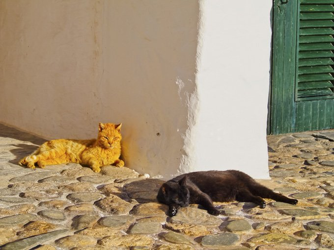 Spanish Town Gives Human Rights To Dogs And Cats - CatTime