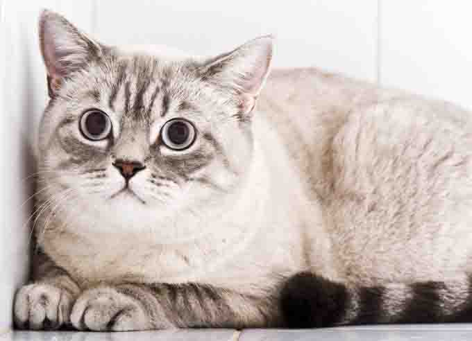 6 Surprising Causes Of Separation Anxiety In Cats - CatTime