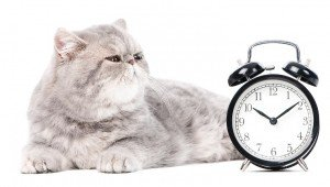 Why Daylight Savings Time Drives Some Cats Berserk