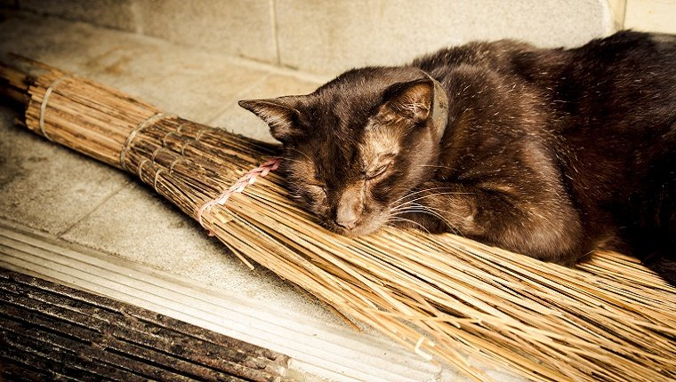 A black cat naps on an old-fashioned broom.