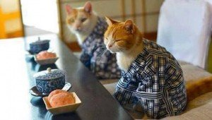 19 Kitties In Kimonos: Hot New Trend In The Cat World [GALLERY]