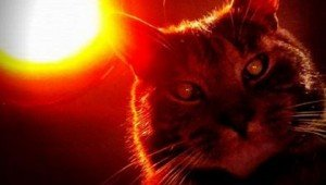 22 Of The Creepiest Cats On Earth: Halloween Edition
