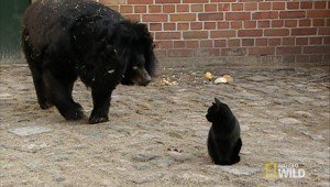 Cat Wanders Into Bear Enclosure And Finds New Best Friend