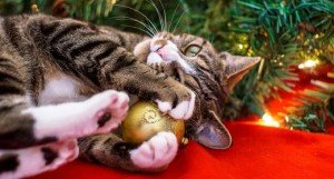 Holiday Safety Tips For Cat Lovers
